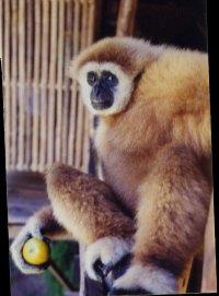 htd-monkey.jpg