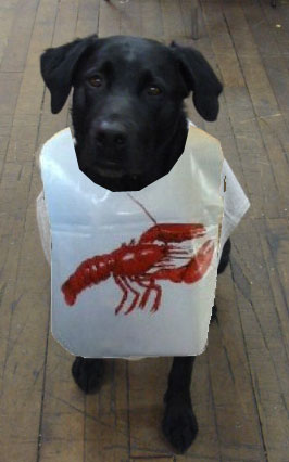 Artists' rendering of Jamoka in a lobster bib.