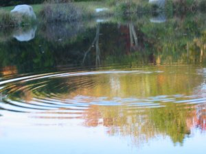 Things stirred up the pond and made swirlies