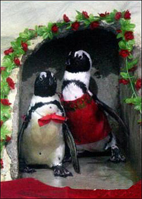 penguinwedding