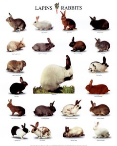 Rabbits, lots of them. We want to fix Cholla so she won't reproduce like rabbits.