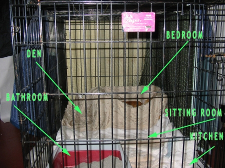 """Cat""'s temporary resting house with layout"