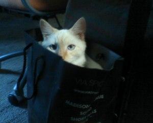 bunny bag 2